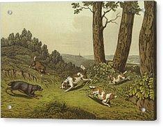 Spaniels Acrylic Print by Henry Thomas Alken