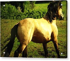 Acrylic Print featuring the photograph Spanish Horse Dancing by Anastasia Savage Ealy