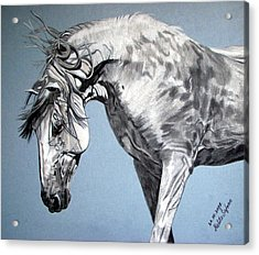 Acrylic Print featuring the drawing Spanish Horse by Melita Safran