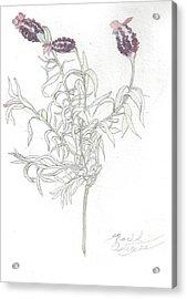 Spanish Lavender Acrylic Print