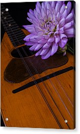 Spanish Mandolin And Dahlia Acrylic Print