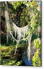 Spanish Moss Over The Swamp Acrylic Print by Carol Groenen