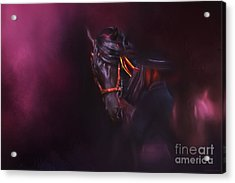 Spanish Passion - Pre Andalusian Stallion Acrylic Print by Michelle Wrighton