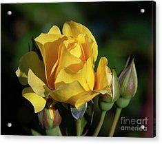 Sparkle N Shine Rose 6 Acrylic Print