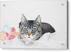 Sparkle Acrylic Print by Raymond Potts