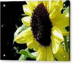 Sparkle Sunflower Acrylic Print