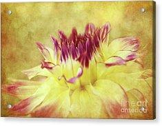 Sparkling Dahlia Acrylic Print