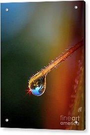 Sparkling Drop Of Dew Acrylic Print