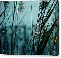 Sparkling Lights Acrylic Print by Susanne Van Hulst
