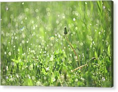 Sparkling Morning. Green World Acrylic Print by Jenny Rainbow