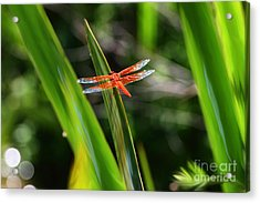 Sparkling Red Dragonfly Acrylic Print