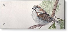 Sparrow Among The Pines Acrylic Print by Leslie M Browning