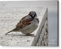 Acrylic Print featuring the photograph Sparrow by Angela DeFrias