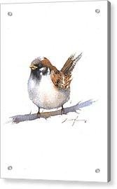 Sparrow Bird Watercolor Art Acrylic Print by Nitin Singh