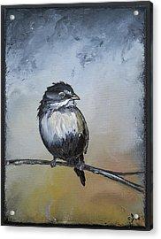 Sparrow Acrylic Print by Carolyn Doe