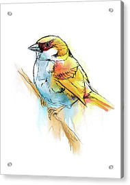 Sparrow Digital Watercolor Painting Acrylic Print