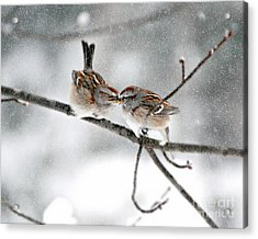 Sparrow Kiss Acrylic Print by Lila Fisher-Wenzel