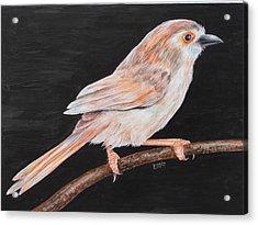 Sparrow Acrylic Print by Rajesh Chopra