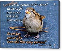Sparrow Scripture Matthew 10 Acrylic Print
