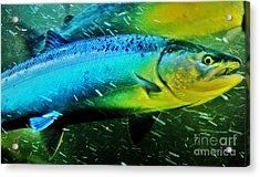 Spawning Home Acrylic Print by Frank Larkin