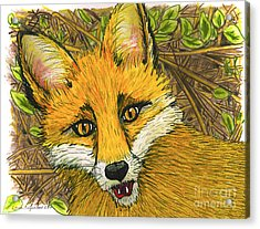 Acrylic Print featuring the drawing Speaking Fox by Laura Brightwood