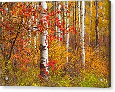 Special Place In The Forest Acrylic Print
