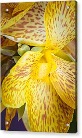 Acrylic Print featuring the photograph Speckled Canna by Christi Kraft