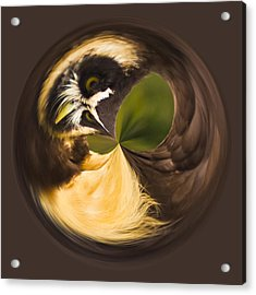 Spectacled Owl Orb Acrylic Print by Bill Barber