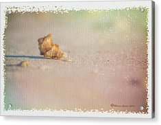 Spent Acrylic Print by Marvin Spates