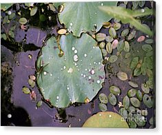 Spider And Lillypad Acrylic Print by Richard Rizzo