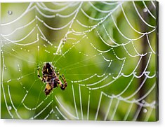 Spider And Spider Web With Dew Drops 05 Acrylic Print