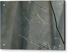 Spider Art Acrylic Print by Trish Hale