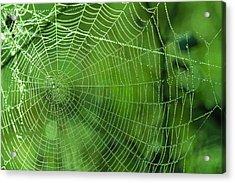 Spider Dew Acrylic Print by Paul Marto