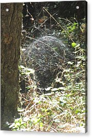 Acrylic Print featuring the photograph Spider Dome by Marie Neder