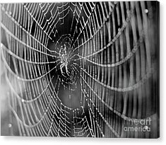 Spider In A Dew Covered Web - Black And White Acrylic Print