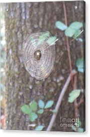 Acrylic Print featuring the photograph Spider In The Round by Marie Neder