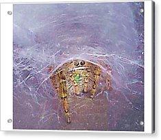 Spider Acrylic Print by Joanne Elizabeth