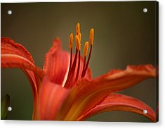 Acrylic Print featuring the photograph Spider Lily by Cathy Harper