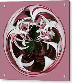 Spider Lily Orb Acrylic Print by Bill Barber