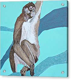 Spider Monkey Acrylic Print