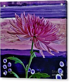 Acrylic Print featuring the photograph Spider Mum With Abstract by Marsha Heiken