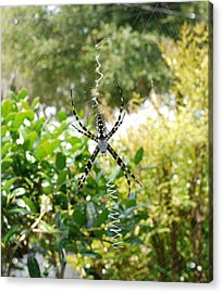 Spider Signals Acrylic Print by Bea Godwin