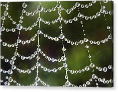 Spider Web Decorated By Morning Fog Acrylic Print by William Lee