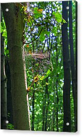 Spider Web In A Forest Acrylic Print