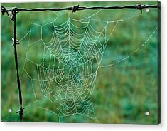 Spider Web In The Springtime Acrylic Print by Douglas Barnett