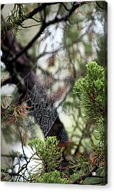 Acrylic Print featuring the photograph Spider Web In Tree by Willard Killough III