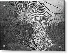 Spider Web Acrylic Print by Jack Zulli