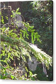 Spider Webs  -- Olympic National Park Acrylic Print