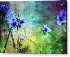 Spiderwort Dance 0115 Idp_2 Acrylic Print