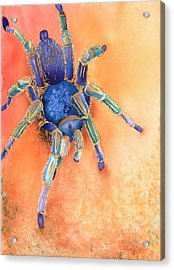 Spidy Acrylic Print by Tracy L Teeter